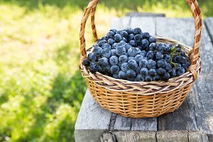 Red wine grapes. dark grapes