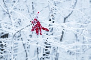 Red glove hanging from a snowy tree