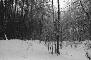Winter Forest | 35mm b&w film scan