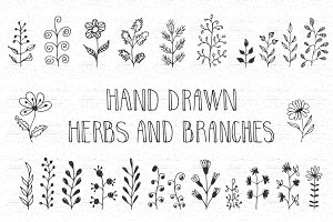 Hand drawn herbs and branches