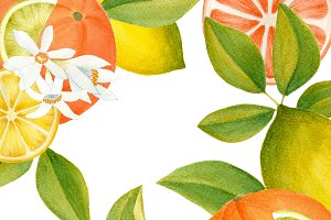 Citrus clipart and papers