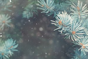 Winter forest background banner