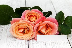 Pink roses and greeting card