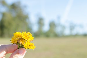 Hand with yellow wild flowers