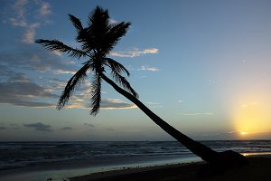 Leaning Palm at Sunrise