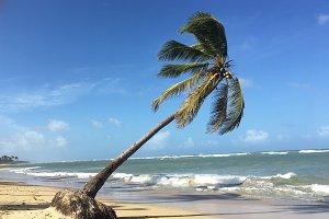 Punta Cana Leaning Palm