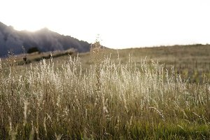 Wild Grass in Mountain Field