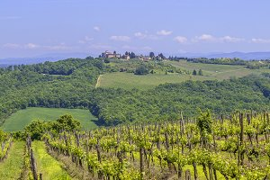 Vineyard in the Chianti