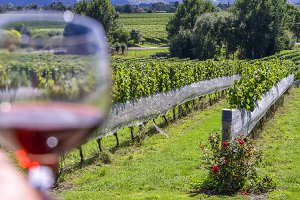 Wineglass in vineyard