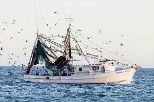 Shrimping Boat II