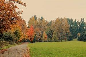 A Fall Lane