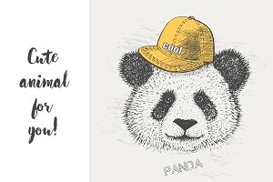 cool Panda in the cap