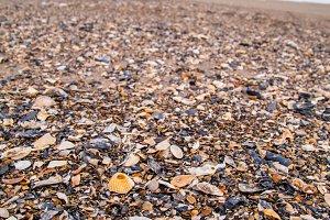 Beach Shell Shore