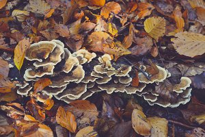 Autumn leaves and Mushroom