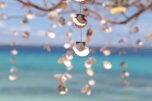 Hanging shells on the tree