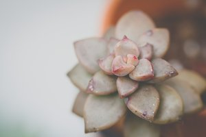 Earthy Succulent