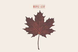 Illustration of a maple leaf