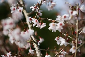 Blossom on a branch