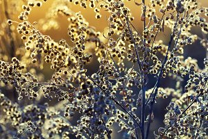 Plant at autumn with gold sunlight from sunset. Abstract background.
