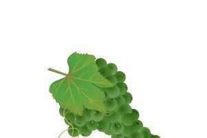 green grapes. vector