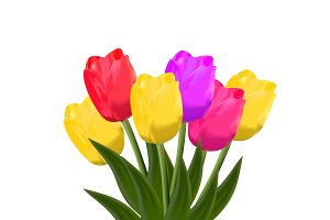tulips. vector