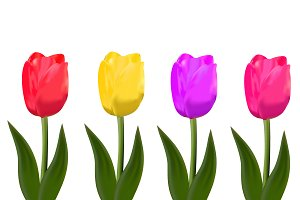 isolated tulips. vector