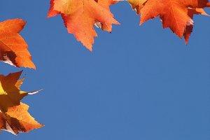 Framed By Autumn