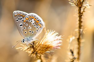 Butterfly perched on dried flowers