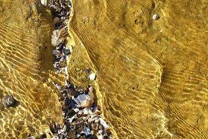 Shells Under Golden Water 2