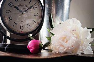Time & Peonies