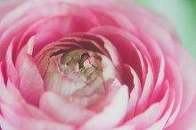 Pink Floral Closeup