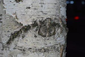 """Eye of the tree"""