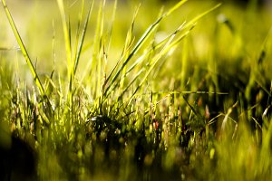Sunshine in the Grass
