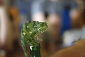 Chameleon on a Bottle