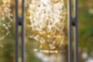 Blurred wet spider web II