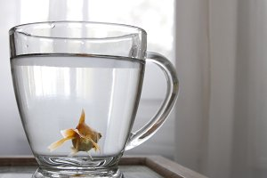 Fish in a Cup