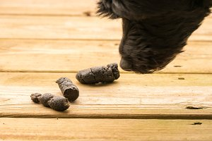 Dog poop on outside decking