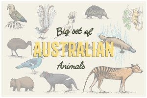 Engraved Australian Animals