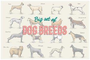 Engraved dog breeds