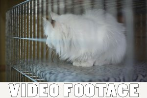 Sad cat is in cage