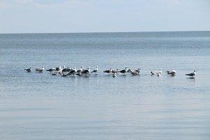 Birds in the Sea