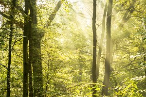 Rays of light on a magical forest I