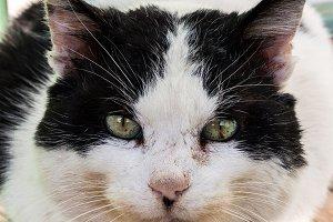 Close Up Front Cat Head