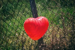 Heart trapped in a fence