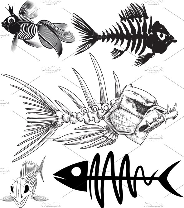 skeleton of five different fish ~ Illustrations ~ Creative Market
