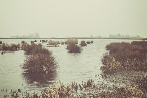 Winter in wetlands
