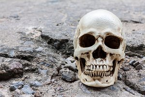 Human skull on crack cement street