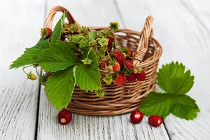 Basket with wild strawberries