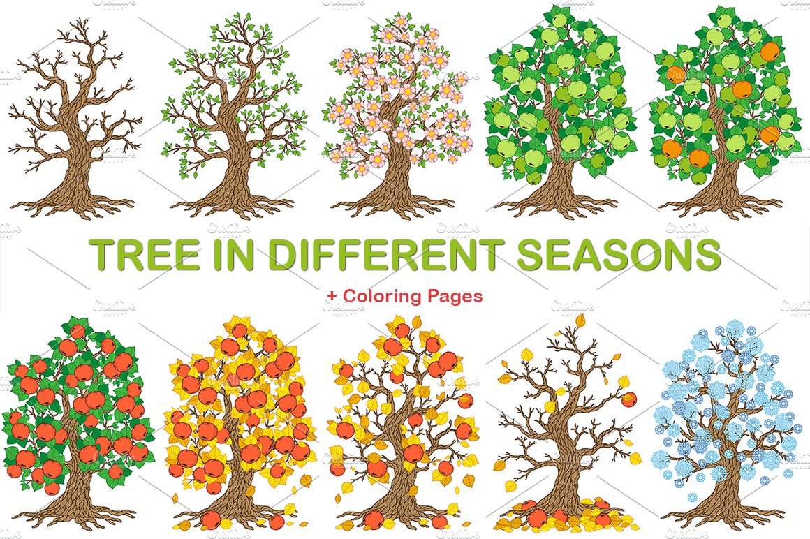 Apple-tree in different seasons ~ Illustrations ~ Creative ...
