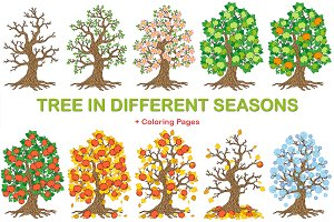 Apple-tree in different seasons